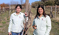 CSU researchers are finalists in Australian Women in Wine Awards