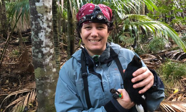 Currawong's plight  draws Charles Sturt researchers to Lord Howe Island