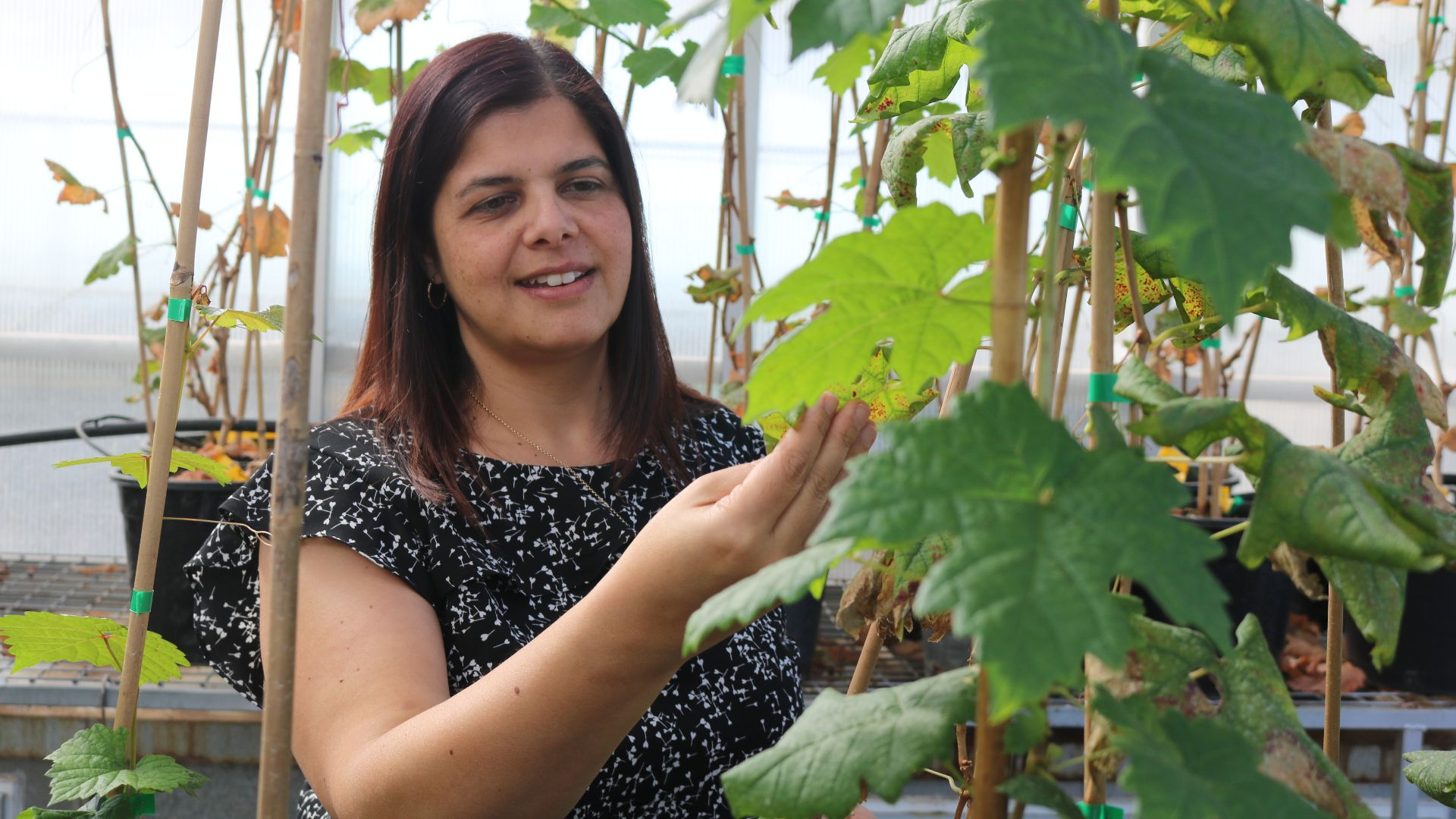 Charles Sturt researchers featured in women in science, technology and engineering publication