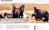 The Conversation - Feral horses in the Australian Alps