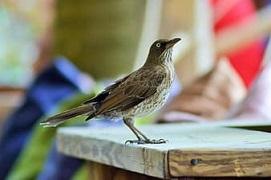 Ornithology Image