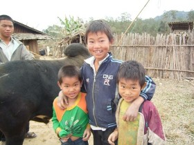 Hmong boys, proud of their bull!