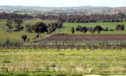 CSU will introduce the University's first postgraduate degree in viticulture and wine science in 2010.