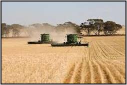 Wheat Cropping