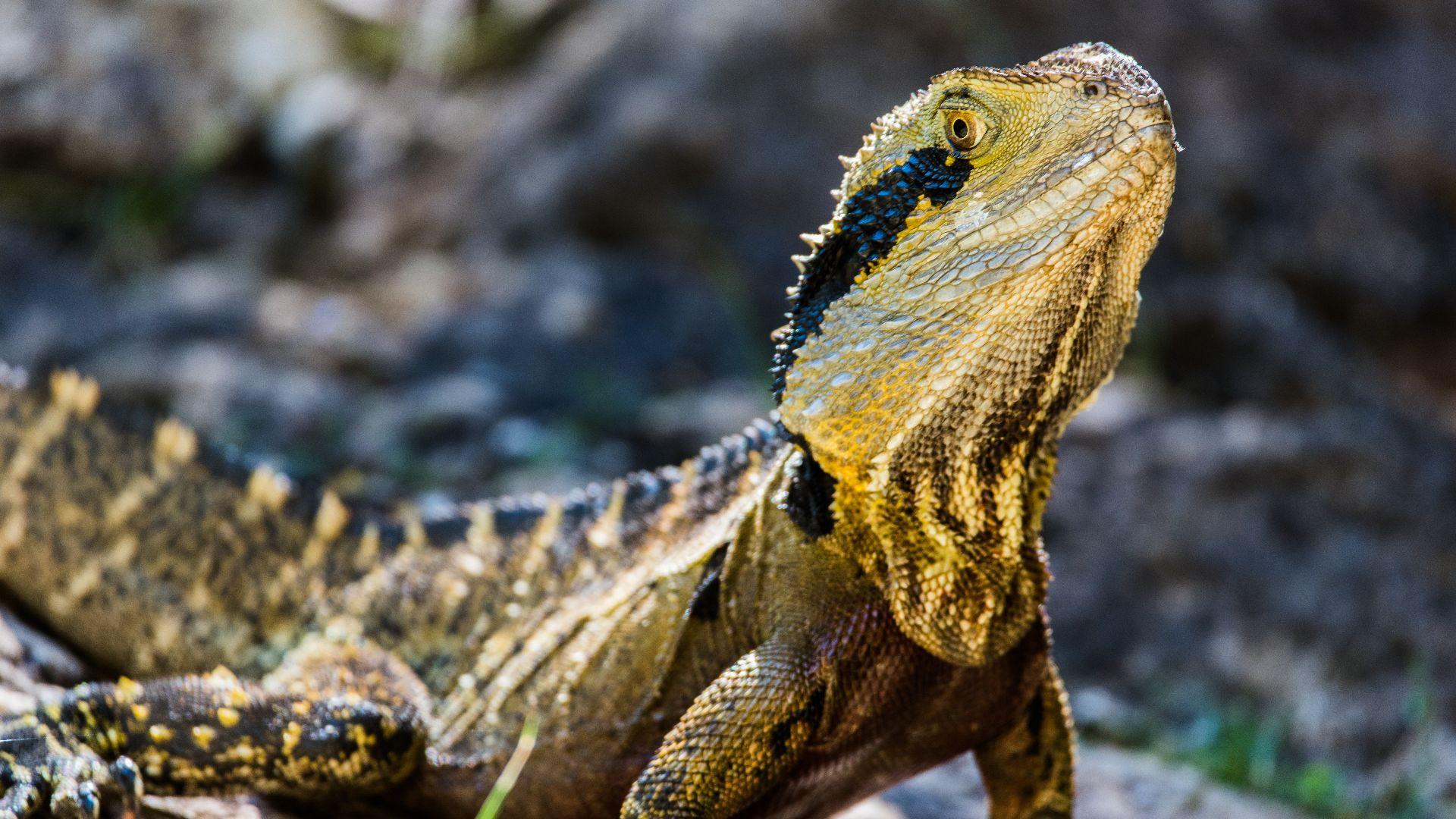 Should I stay or should I go? How Australia's animals survive bushfires