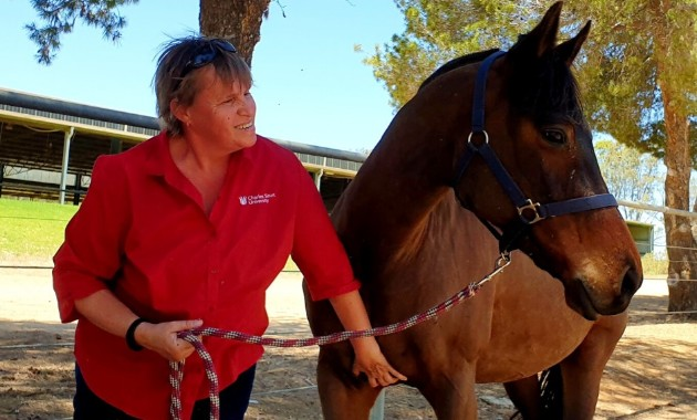 Charles Sturt academic conducts research on effect of COVID-19 on horse owners