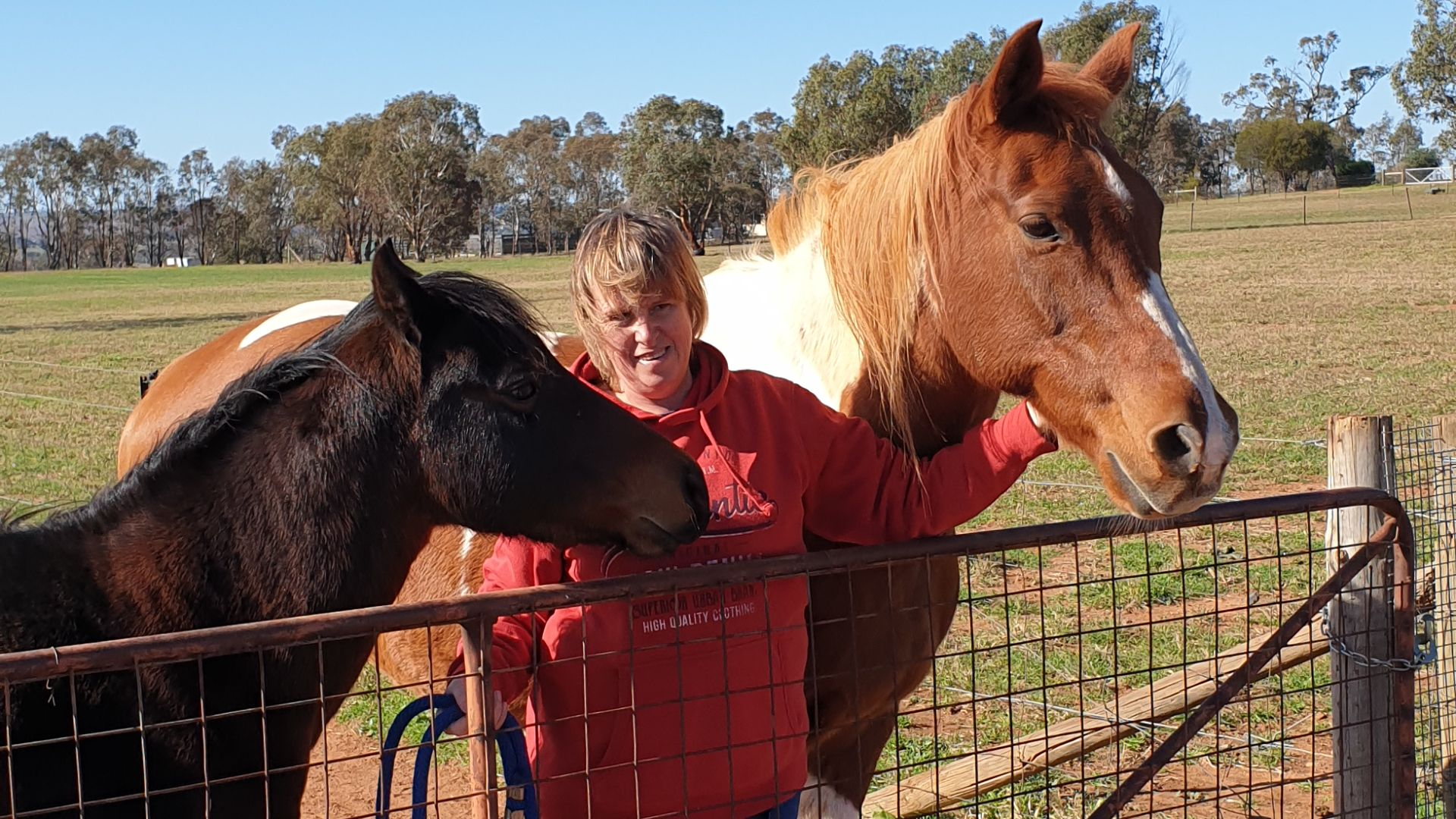 Horse owners worried about long-term financial impact of COVID-19