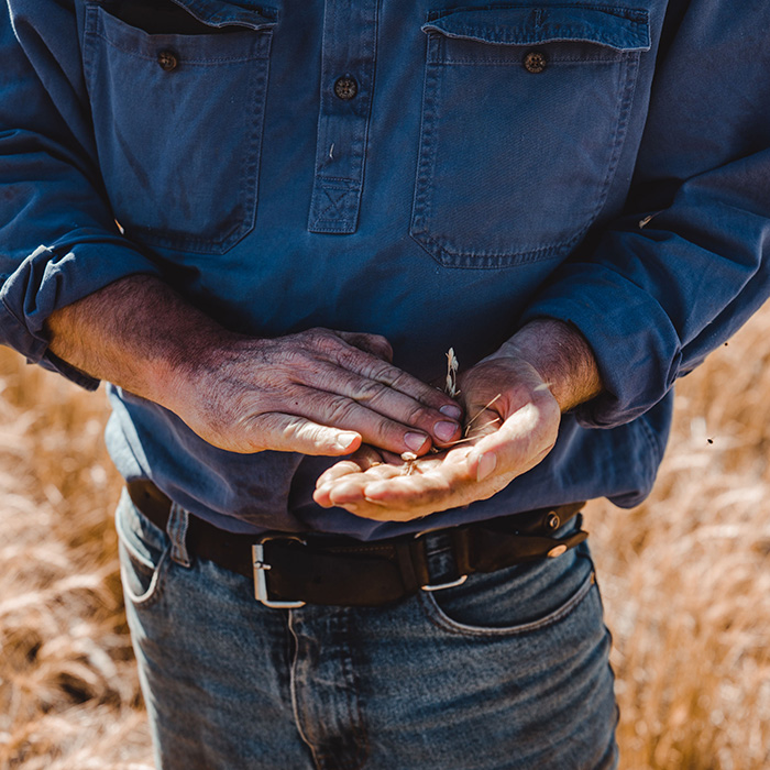 photo of a man holding wheat