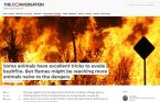 Animal tricks to evade bushfires