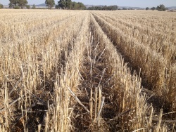 Stubble-forum-will-explore-the-relationship-between-soil-biology-and-carbon