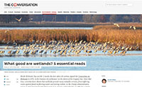 What good are wetlands?