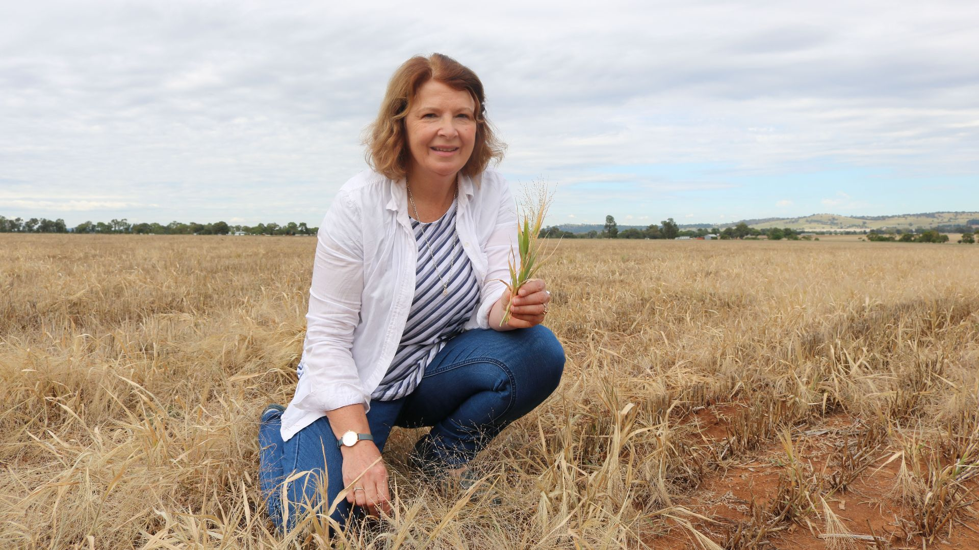 Charles Sturt research project on novel weed management identifies tactics for mixed farming systems
