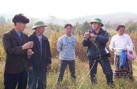 Hmong farmers discuss fodder management with extension staff in the field