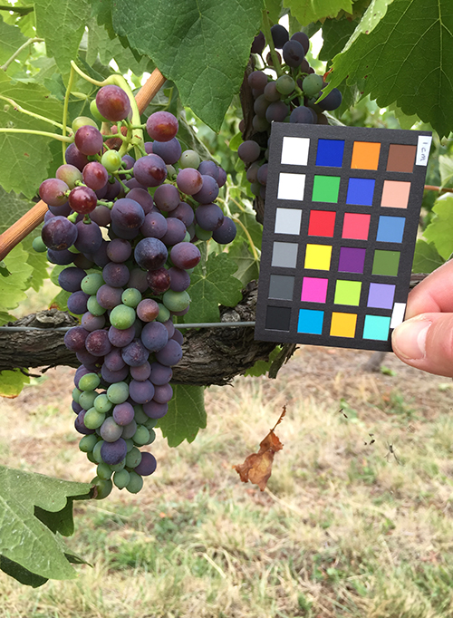 The app will help growers track berry size and colour