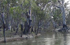 Colligen Creek