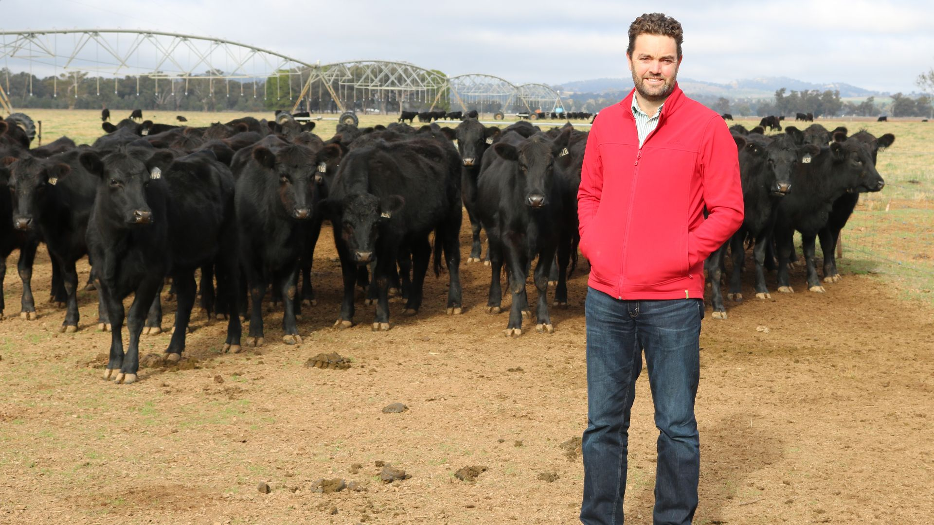 Webinar explores how dual purpose crops can 'beef-up' winter feed options