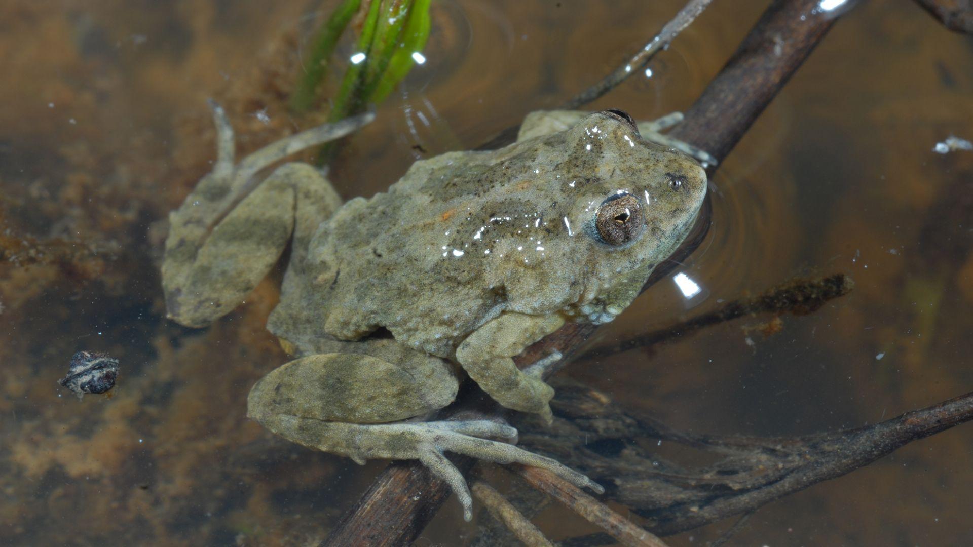 Charles Sturt helps Albury's endangered Sloane's froglet this National Tree Day