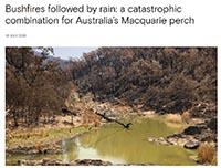 Bushfires and Macquarie perch