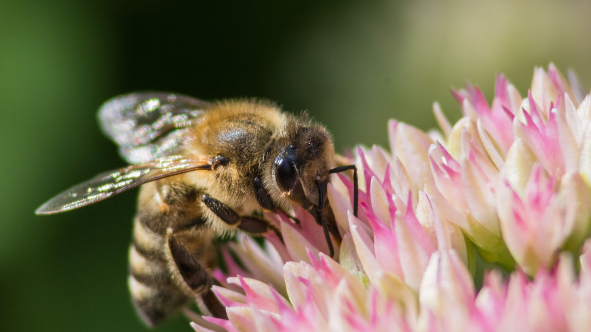 Pollinator garden aims to bolster biodiversity and protect the food supply